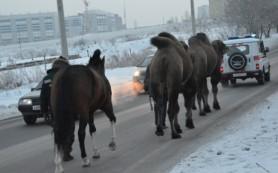 «Росгосцирк» приютит дрессированных животных, брошенных в Красноярске