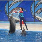 """В Москве показали фильм о темной стороне """"шоу с дельфинами"""""""