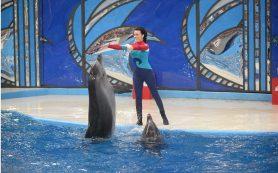 В Москве показали фильм о темной стороне «шоу с дельфинами»