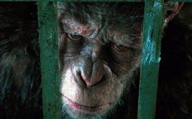 Почему стоит посмотреть новую «Планету обезьян»