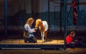 КУЛЬТУРА В конном театре «ВелесО» сыграли «Путешествия Гулливера»