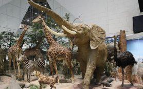 Дарвиновский музей раскрыл тайны экспонатов