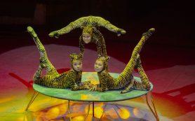 Фестиваль циркового искусства и другие события в мире культуры
